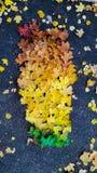 Les feuilles d'automne de gradient Image libre de droits