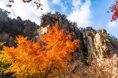 Les feuilles d'automne en Bei Jiu Shui traînent, montagne de Laoshan, Qingdao, Chine Image libre de droits