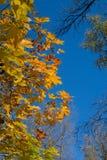Les feuilles d'automne encadrent le ciel bleu Photos libres de droits