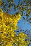 Les feuilles d'automne encadrent le ciel bleu Photo libre de droits