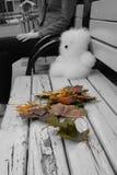 Les feuilles d'automne et un ours jouent sur un banc Image libre de droits