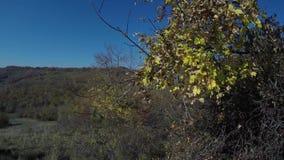 Les feuilles d'automne glissent dans la lumière de matin et le beau panorama banque de vidéos