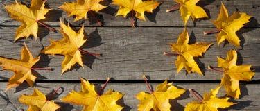 Les feuilles d'automne jaunes de l'érable dans le modèle de cercle woooden dessus le Ba Photographie stock