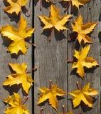 Les feuilles d'automne jaunes de l'érable dans le modèle de cercle woooden dessus le Ba Photographie stock libre de droits
