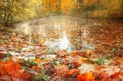 Les feuilles d'automne jaunes et rouges se trouvent sur le rivage d'un étang Image libre de droits