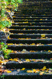 Les feuilles d'automne jaunes sur les étapes en pierre dans Dandenong s'étend, Australie Images stock