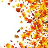 Les feuilles d'automne ont dispersé le fond Chêne, érable et sorbe Illustration Stock