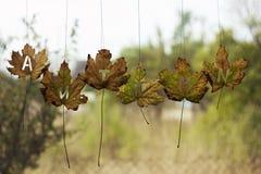 Les feuilles d'automne sur une fenêtre humide ont marqué l'automne Photo libre de droits