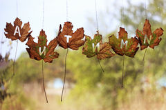 Les feuilles d'automne sur une fenêtre humide ont marqué l'automne Photo stock