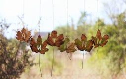 Les feuilles d'automne sur une fenêtre humide ont marqué l'automne Image stock