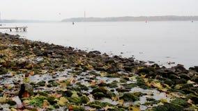 Les feuilles d'automne tombent dans la rivière banque de vidéos