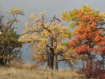 Les feuilles d'automne vives ont pressé contre un ciel orageux sur le dessus d'une colline Images libres de droits