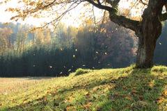 Les feuilles d'or tombent vers le bas Photos libres de droits
