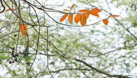 Les feuilles de bout Image libre de droits