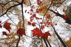 Les feuilles de bout Photographie stock