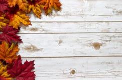 Les feuilles de chute et d'automne sur une planche en bois blanchie embarquent Images libres de droits