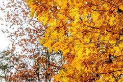 Les feuilles de jaune d'automne ont brouillé le fond des arbres photographie stock