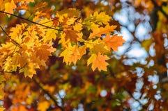 Les feuilles de jaune d'automne ont brouillé le fond des arbres photos libres de droits