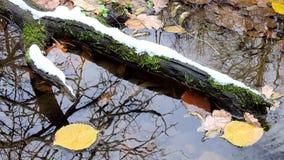 Les feuilles de jaune flottent dans l'eau, magma dans la forêt d'automne, les premières chutes de neige d'hiver banque de vidéos
