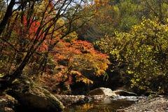 Les feuilles de l'érable d'automne Photographie stock libre de droits