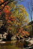 Les feuilles de l'érable d'automne photos libres de droits