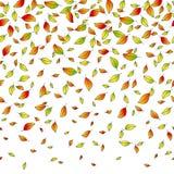 Les feuilles de l'automne, dirigent le modèle sans couture, une illustration de vecteur de concept photographie stock