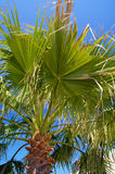 Les feuilles de la paume dans le ciel pur photo stock