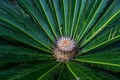 Les feuilles de palmier Image libre de droits