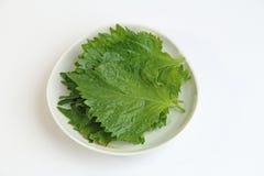 Les feuilles de perilla, également connues sous le nom de feuille de Shiso, feuille d'Ooba ou biftek Photos stock