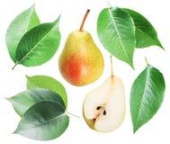 Les feuilles de poire et la poire vertes portent des fruits sur le fond blanc Photo libre de droits