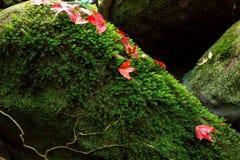 Les feuilles de rouge sur la mousse verte Images stock
