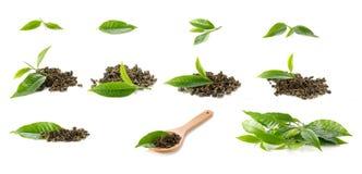 Les feuilles de thé vertes sur le fichier blanc de background Image libre de droits