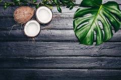 Les feuilles de vert de Monstera plantent l'élevage dans sauvage, l'usine tropicale de forêt sur le fond noir La noix de coco est Images libres de droits