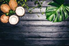 Les feuilles de vert de Monstera plantent l'élevage dans sauvage, l'usine tropicale de forêt sur le fond noir La noix de coco est Photos libres de droits