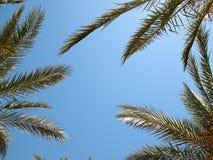 Les feuilles des palmiers contre un ciel bleu Images stock