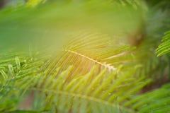 Les feuilles du fond brouillé des feuilles photographie stock