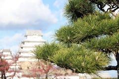 Les feuilles du thunbergii de pinus avec le ciel bleu et le blanc Himeji de tache floue se retranchent le fond images stock