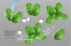 Les feuilles en bon état dirigent réaliste Conception détaillée de label de placement de produit Saveur en bon ?tat illustrations photos libres de droits