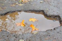 Les feuilles jaunes d'érable se situent dans un nid de poule rempli avec de l'eau Assiette de la route détruite dangereuse La mau images libres de droits