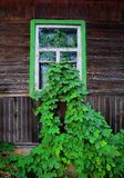Les feuilles ont élevé la maison d'I Photo stock