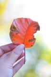 Les feuilles oranges tombent il le ` s un signe que l'automne est arrivé Photo stock