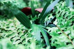 Les feuilles plantent et fougère avec le lever de soleil photos libres de droits