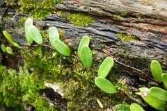 Les feuilles plantent et mousse Photos stock