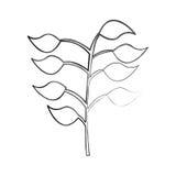 Les feuilles plantent l'icône d'isolement illustration stock
