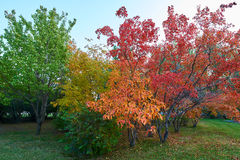 Les feuilles polychromes Photos libres de droits