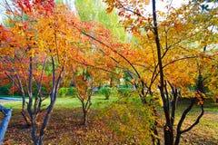 Les feuilles polychromes d'automne Photo stock
