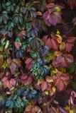 Les feuilles rouges, jaunes, vertes sont verticales images stock