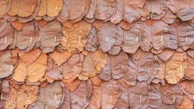 Les feuilles sèches de Brown donnent une consistance rugueuse ou partent derrière le fond pour la conception de l'avant-projet d' Photographie stock