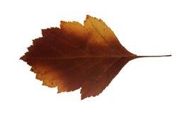 Les feuilles sèches de chute des usines, fleurs et branches, ont isolé l'elem Images stock