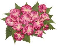 Les feuilles sèches de chute des usines, fleurs et branches, ont isolé l'elem Image stock